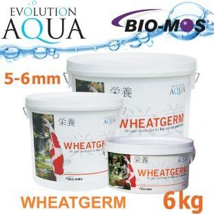 EA Wheatgerm, celoroční krmivo pro malé a menší rybky, velikost 3-4 mm, balení 6 kg Evolution Aqua