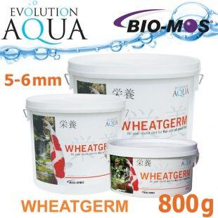 EA Wheatgerm, celoroční krmivo pro střední a velké rybky, velikost 5-6 mm, balení 800g Evolution Aqua